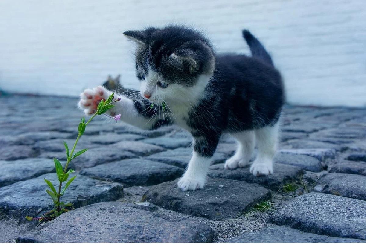 Makanan dan minuman yang tidak boleh diberikan pada kucing