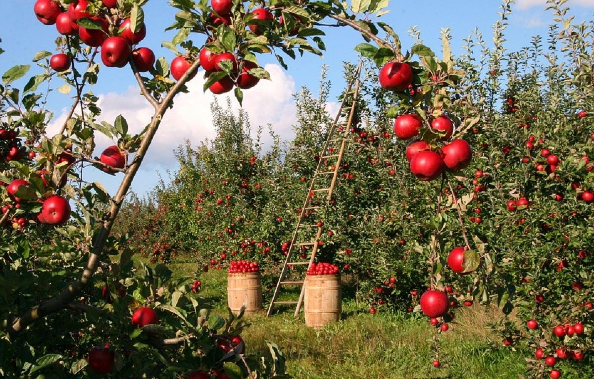 Macam macam buah yang dapat dikonsumsi bagi penderita stroke